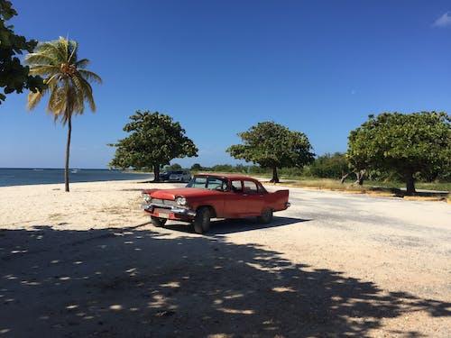 キューバ, パルム, ビーチ, 休日の無料の写真素材