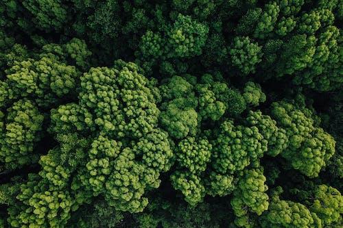 Darmowe zdjęcie z galerii z brokuły, gromada, grono