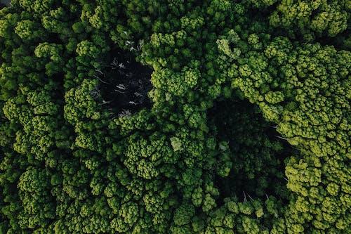 Darmowe zdjęcie z galerii z brokuły, jarmuż, jedzenie