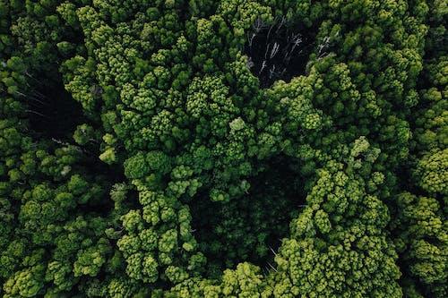 Darmowe zdjęcie z galerii z brokuły, flora, jarmuż