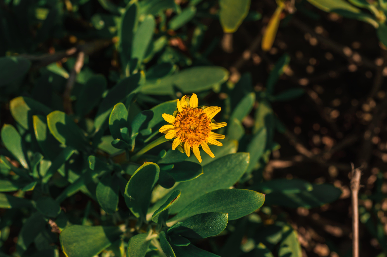 계절, 꽃가루, 꽃이 피는, 꽃잎의 무료 스톡 사진
