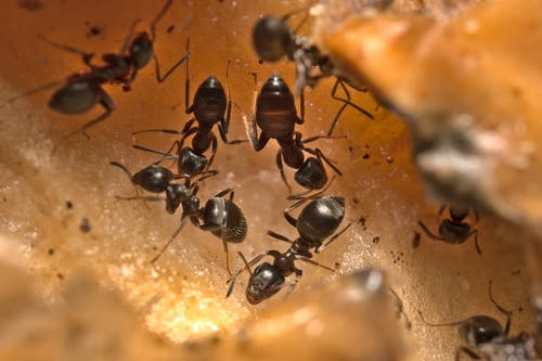 Free stock photo of ants running in a circle, close up