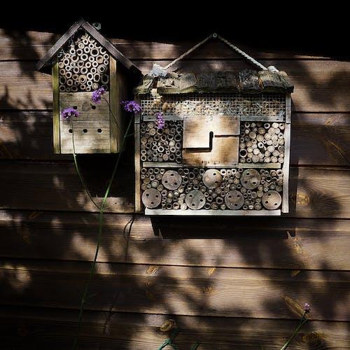 Immagine gratuita di api, casa, estate