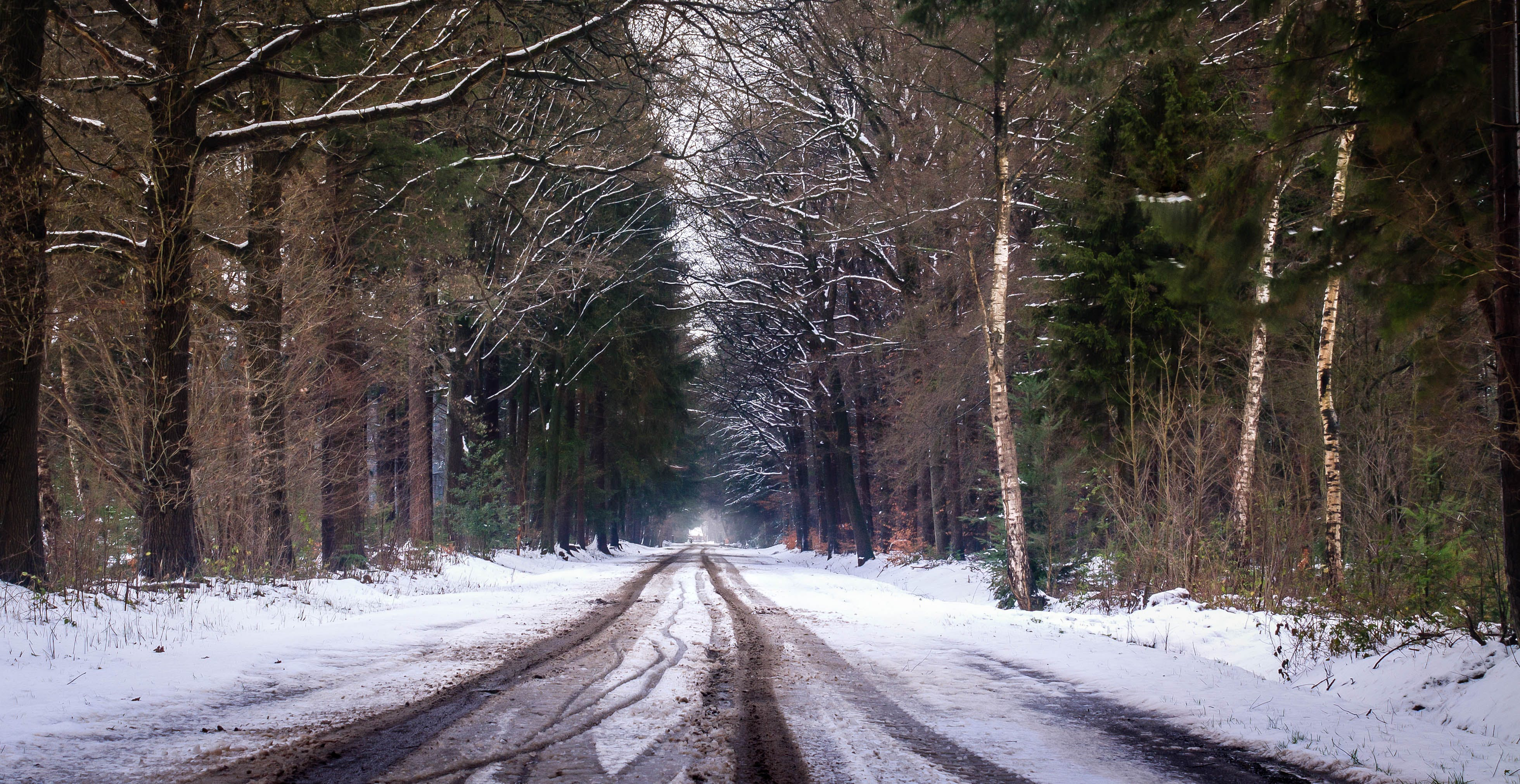 Free stock photo of bomen, bos, cold, december