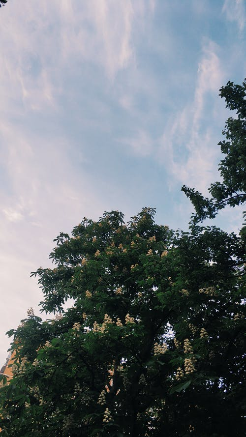 Green Tree Under White Clouds