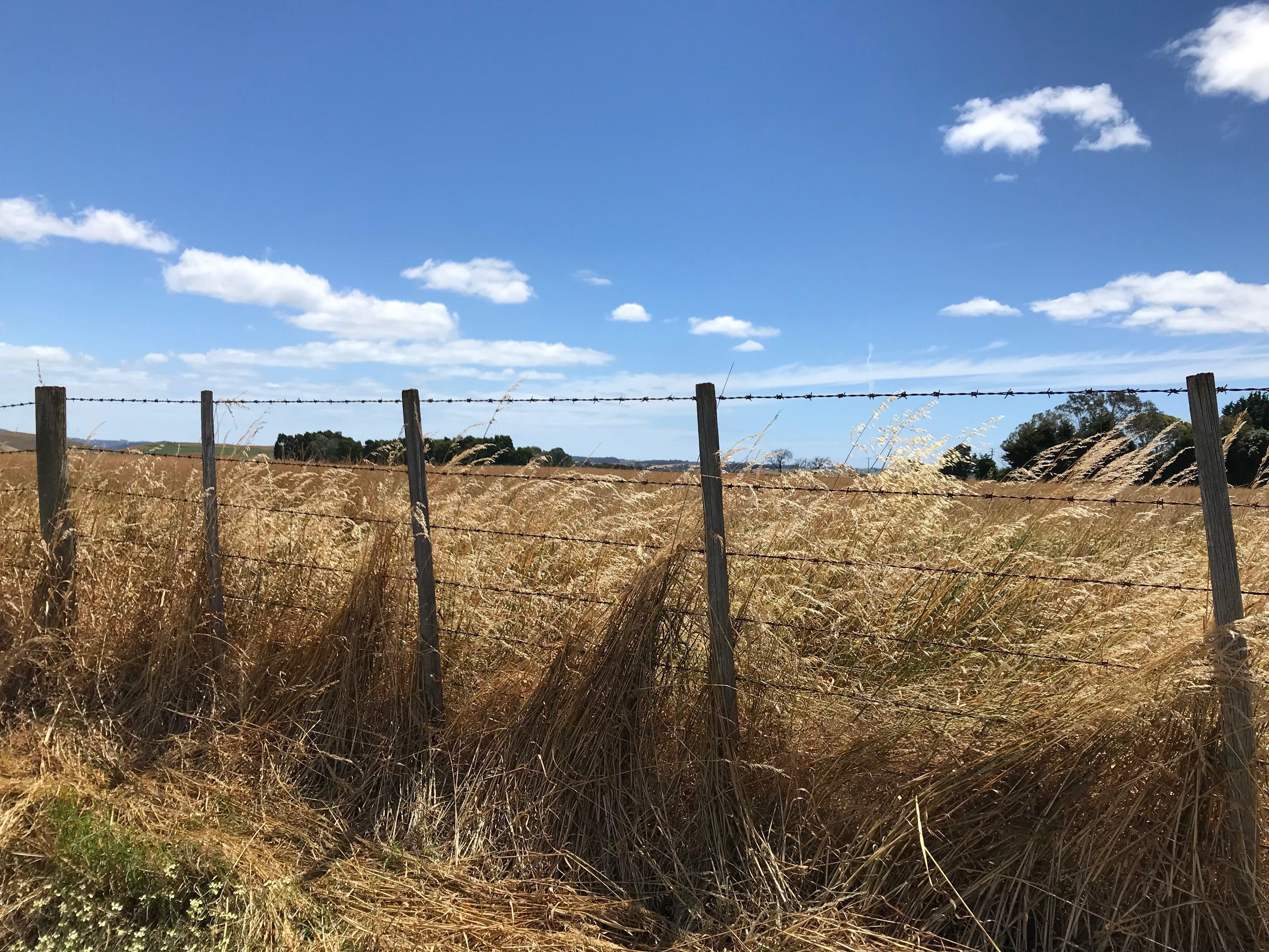 Free stock photo of farm fence