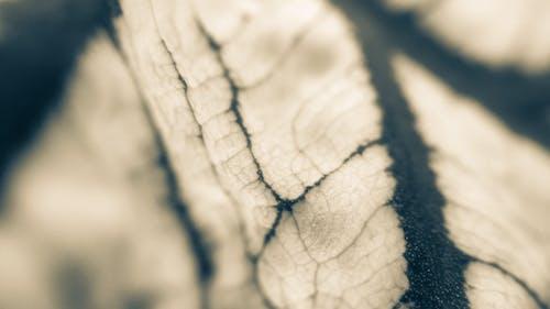 Free stock photo of close-up, macro, nature, plant