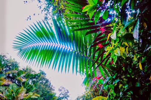 Darmowe zdjęcie z galerii z drzewo palmowe, dżungla, kwiatowy, las