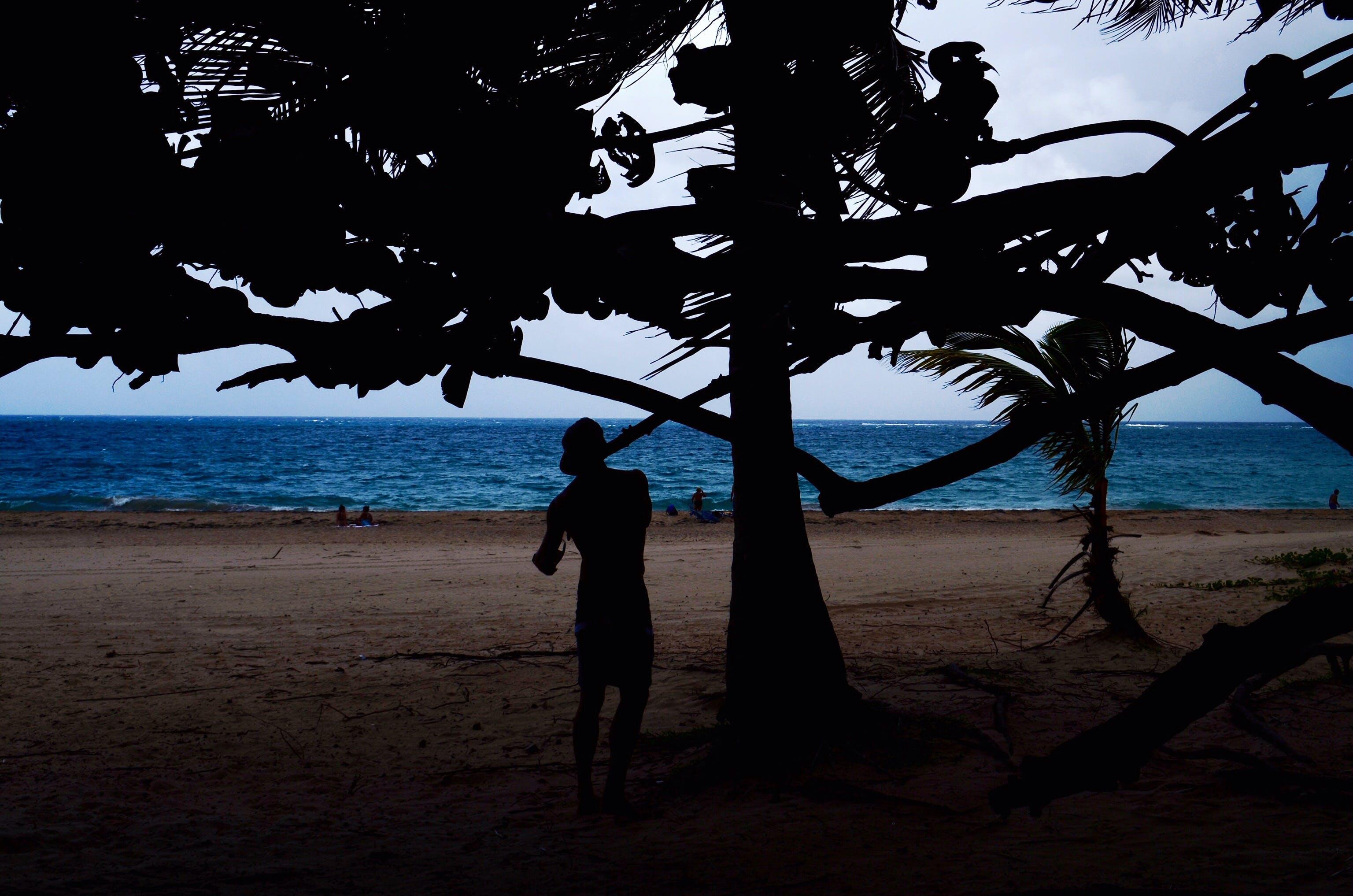 Silhouette Of Man Beside Tree Near Seashore