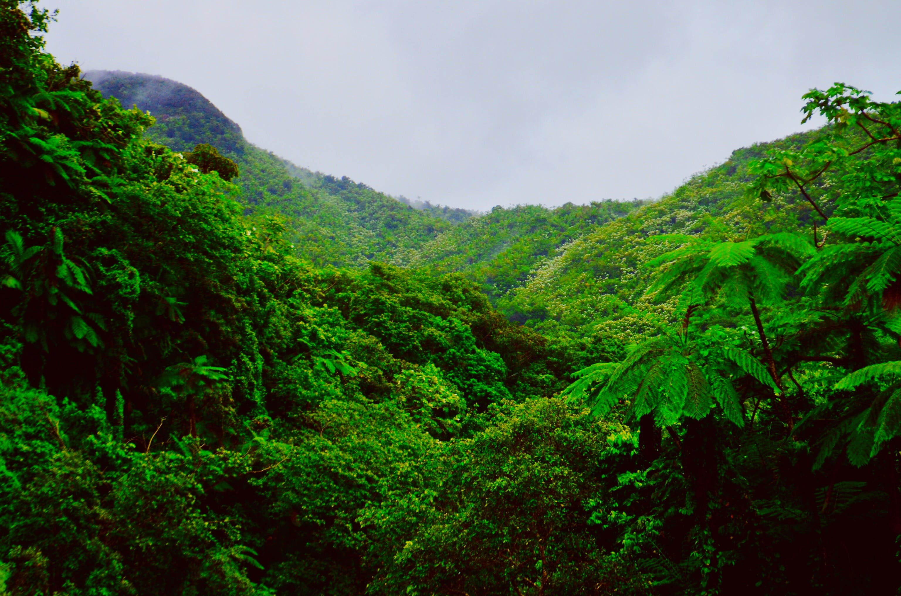 Mountain Covered With Green Trees