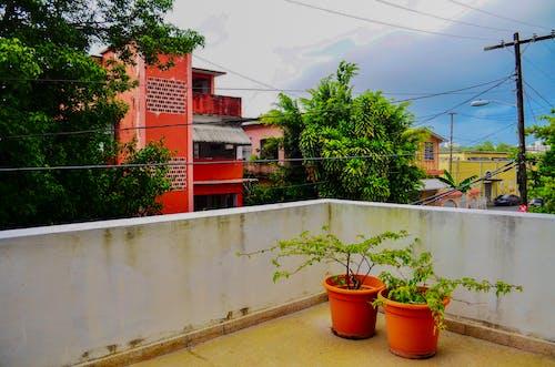 Foto d'estoc gratuïta de arbres, arquitectura, balcó, cables elèctrics