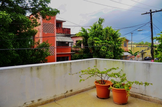 Two Green Leaf Plants With Orange Pots on Terrace