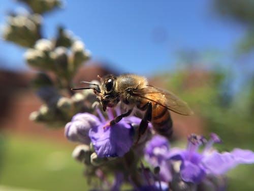 Gratis lagerfoto af bi, blomst, insekt, natur