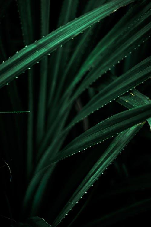 Photos gratuites de abstrait, agave, aloe