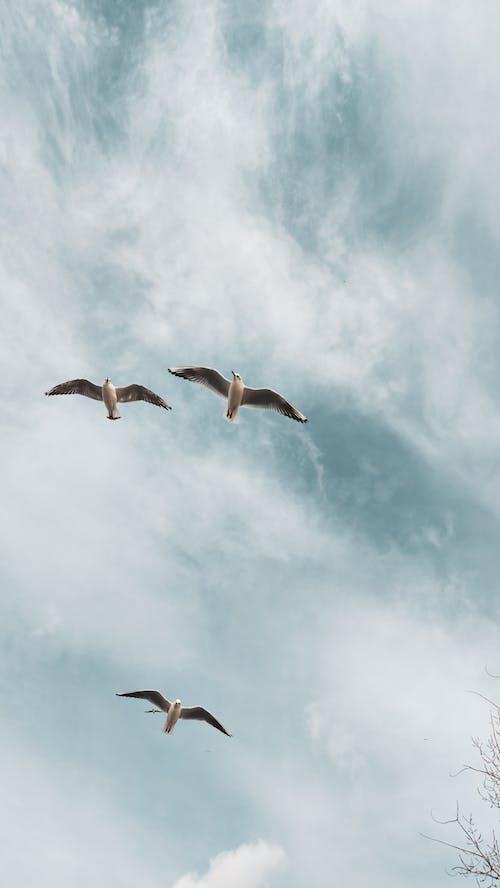 Kostenloses Stock Foto zu aufnahme von unten, fliegen, flug