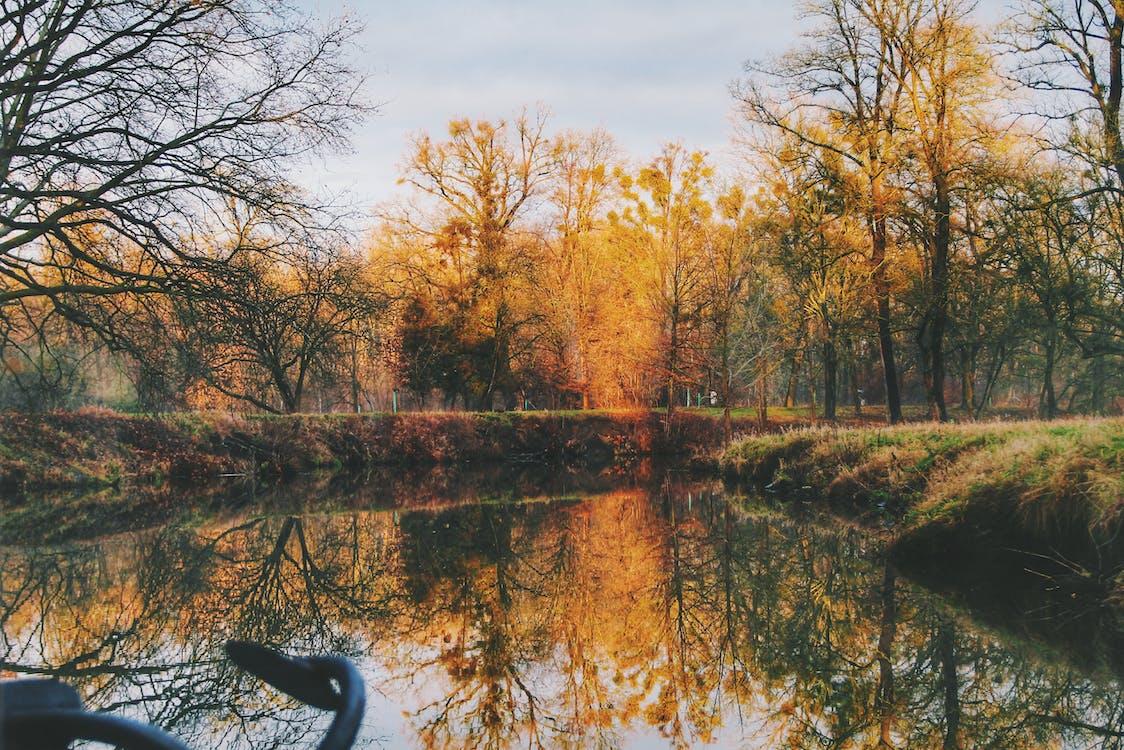 ветви, вода, деревья