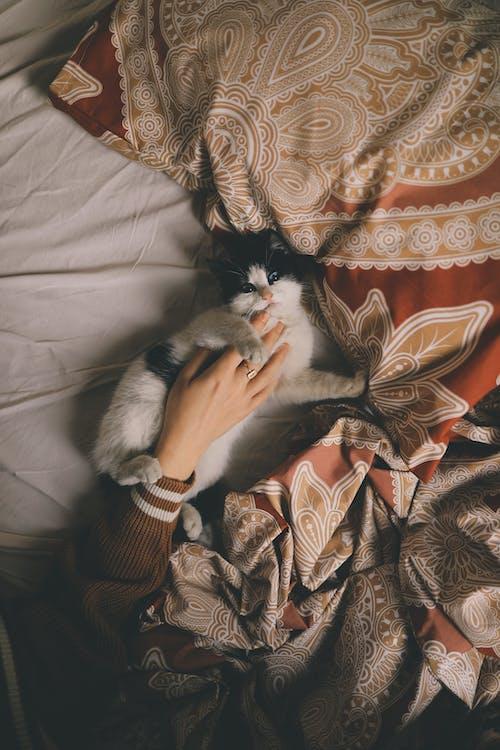 アート, アダルト, ネコの無料の写真素材