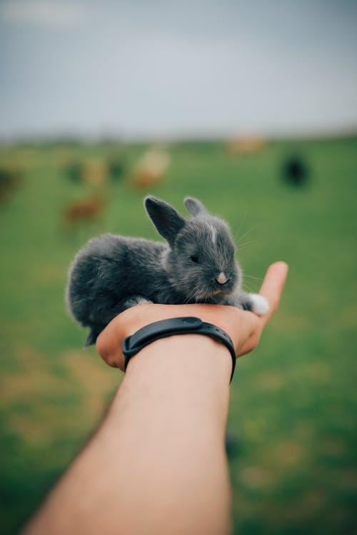 Little rabbit on hand of crop person against green field