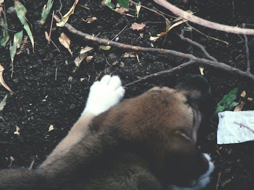 Photos gratuites de arbre abattu, arbres tombés, bébé chien, chien