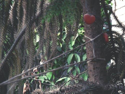修剪花草, 倒下的树木, 傷心, 光 的 免费素材照片