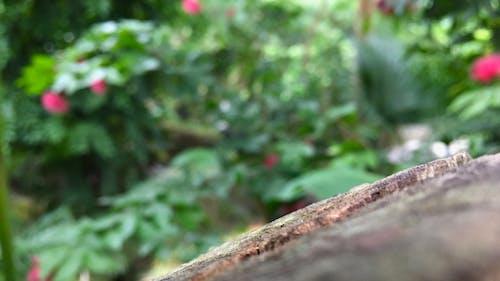 Darmowe zdjęcie z galerii z drewno, kwiat, natura, zielony