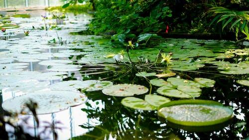 Immagine gratuita di acqua, giardino, giardino botanico