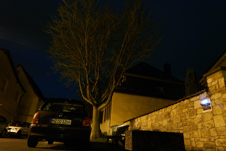 Free stock photo of night, nightscape, tree