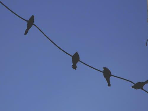 晴朗的天空, 線, 藍天, 陰影 的 免费素材照片