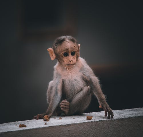 Brown Monkey Sitting on Gray Concrete Floor