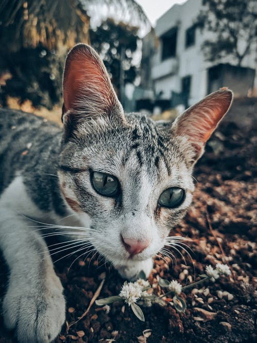 Free stock photo of cat