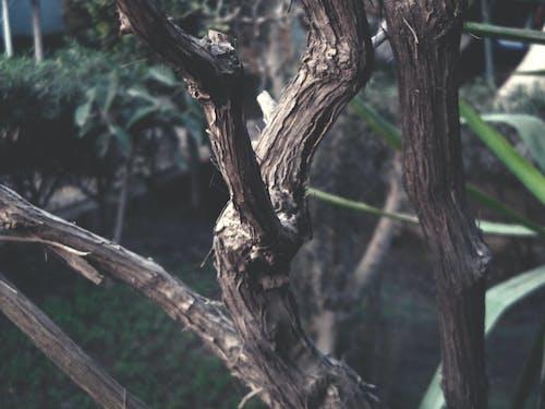 Безкоштовне стокове фото на тему «виноград, дерева, дерево, зелений»