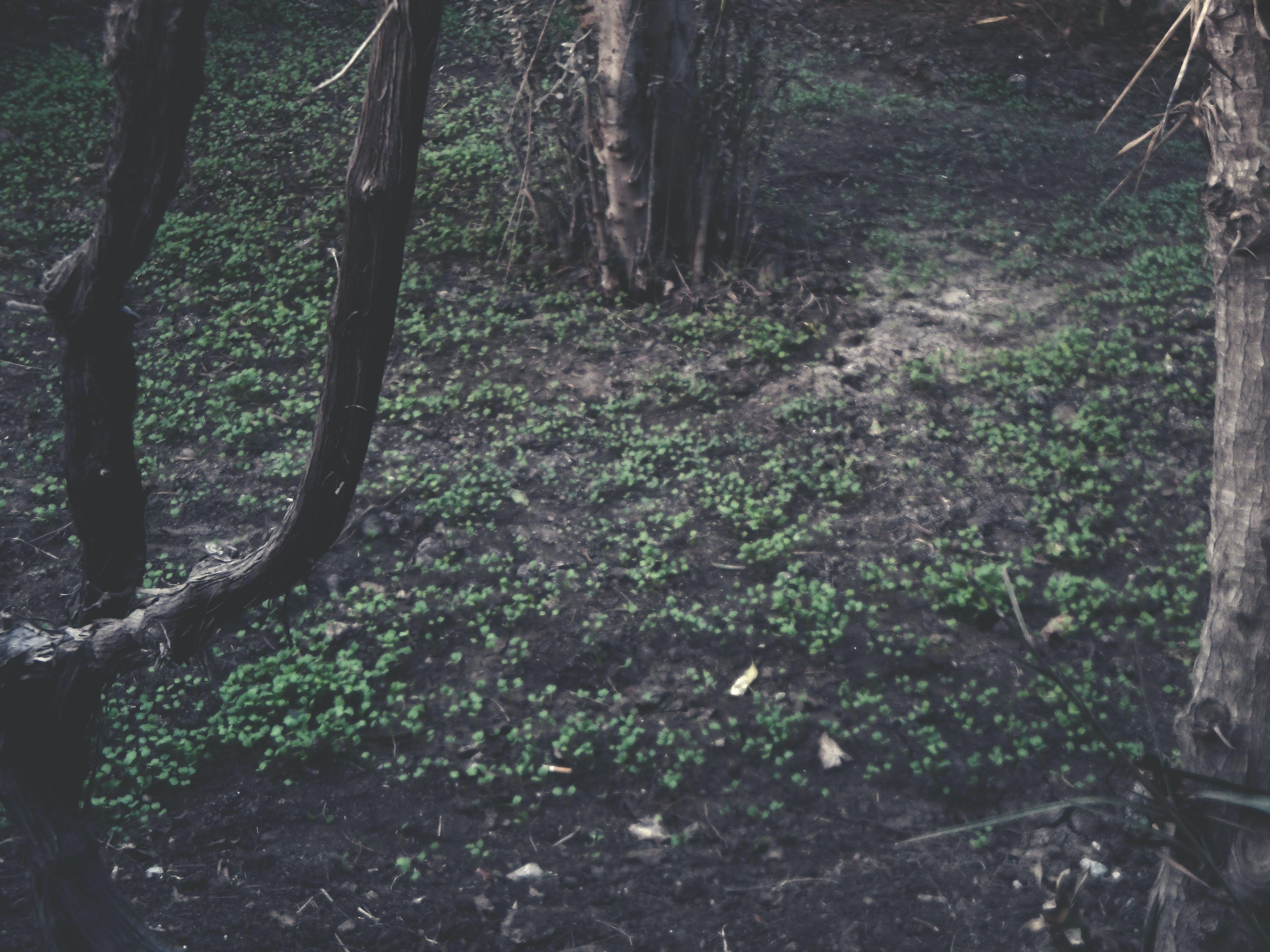 Free stock photo of brown, dry, foliage, garden