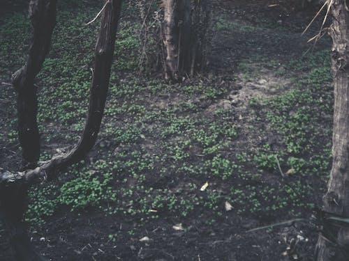 Безкоштовне стокове фото на тему «вирощування, вирощувати, дерева, дерево»