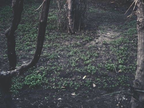 Photos gratuites de arbre, arbres, brun, centrales