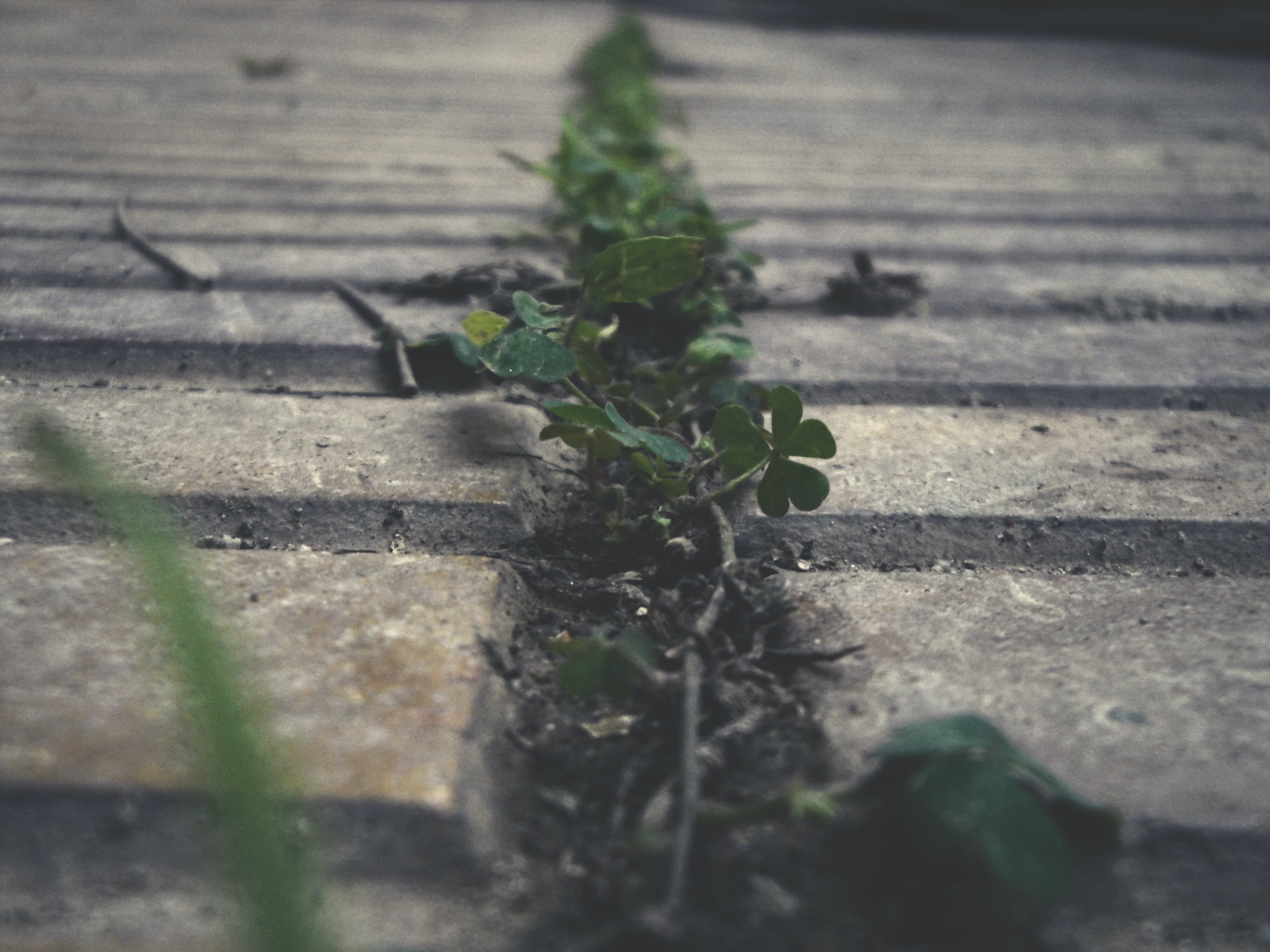 Free stock photo of alive, dry, foliage, garden