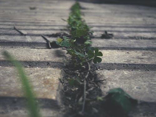 Безкоштовне стокове фото на тему «живий, життя, зелений, листя»