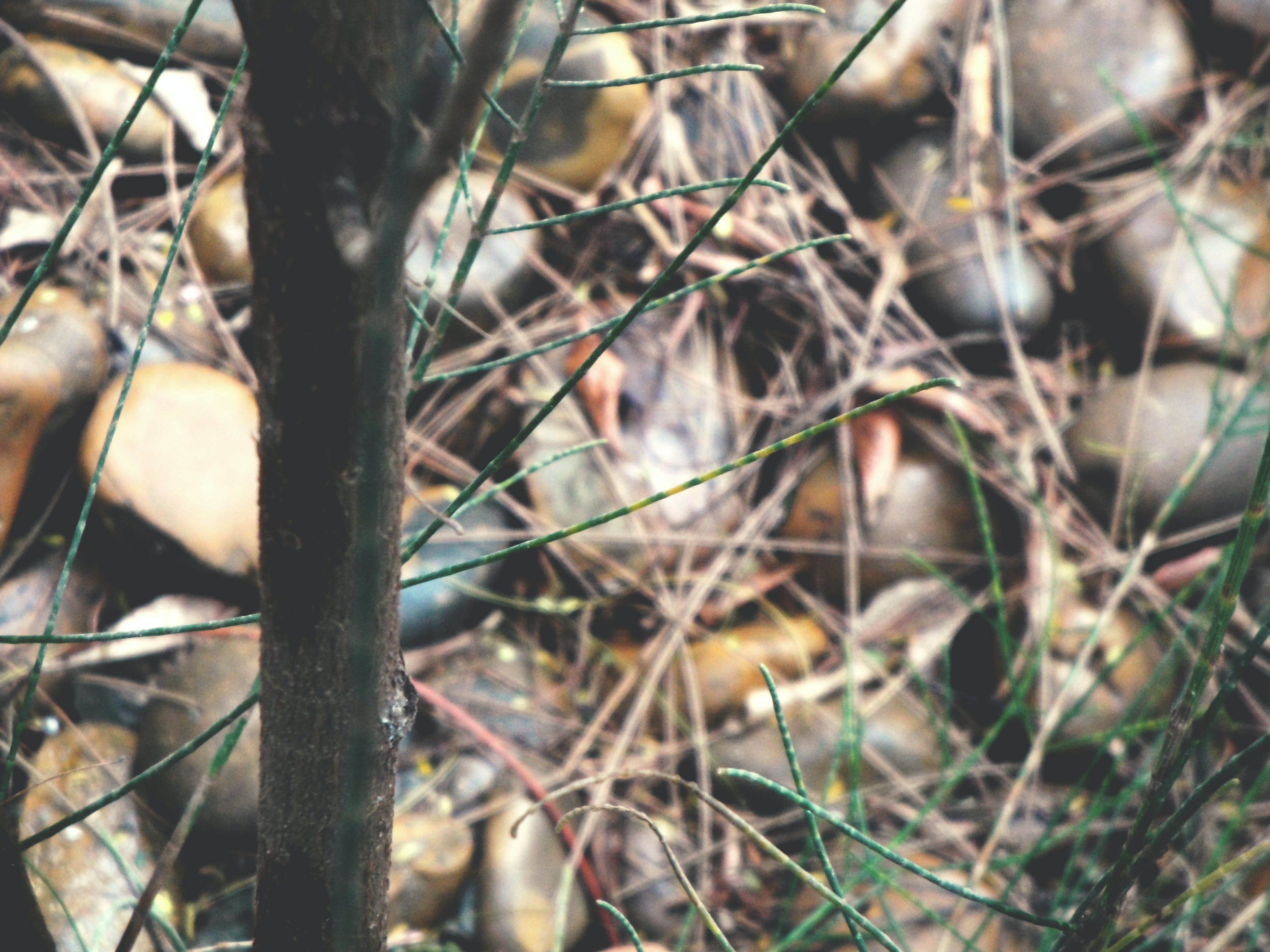 Free stock photo of blur, brown, dry grass, dry leaves