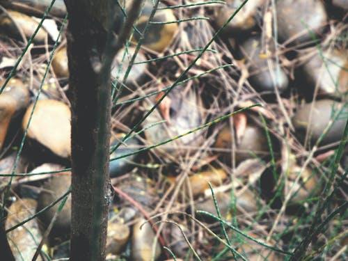 乾草, 幹, 根, 棕色 的 免费素材照片
