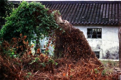 Free stock photo of hong kong, hongkong, house remains