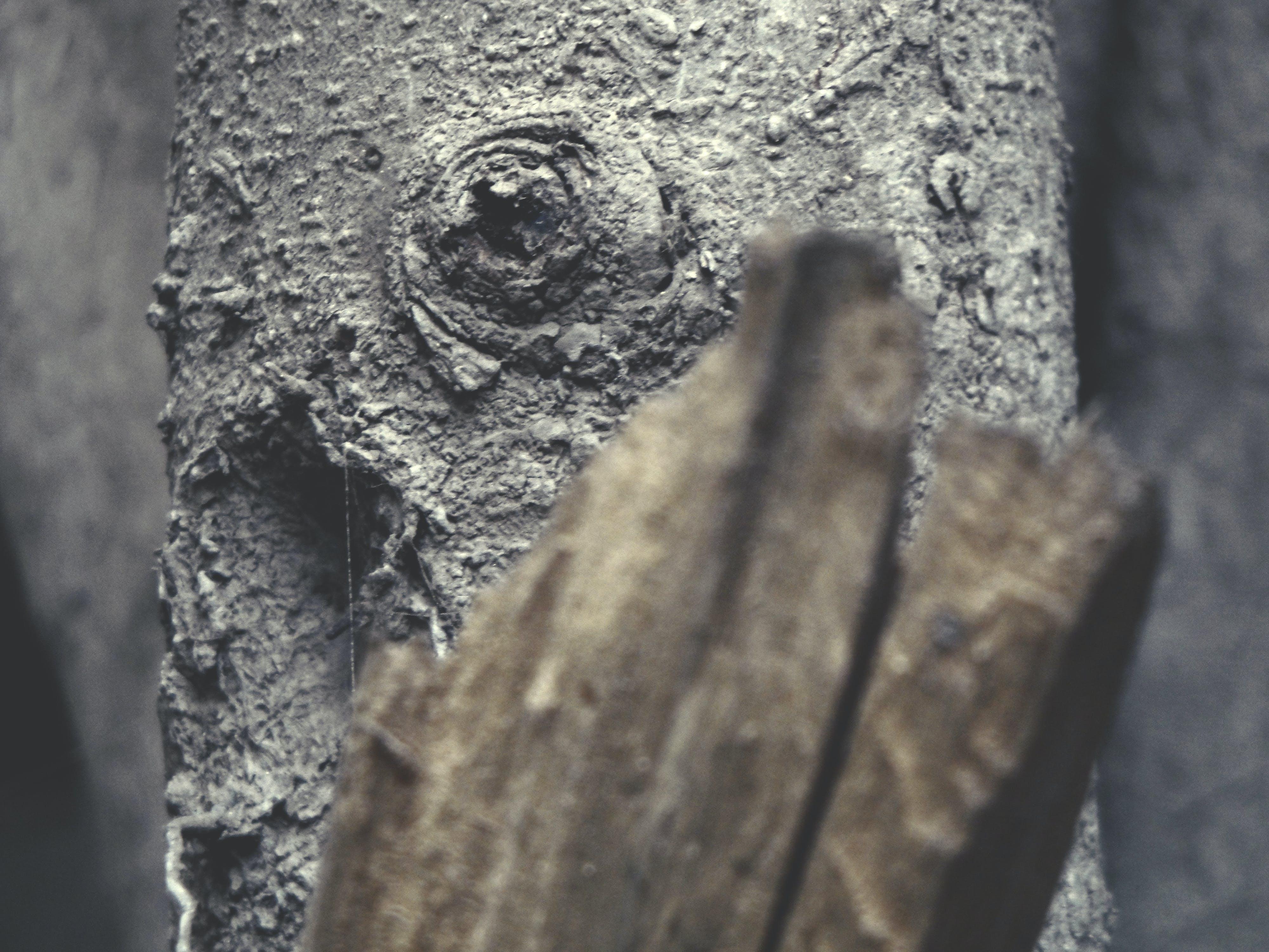 Free stock photo of eye, folliage, old, texture