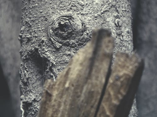 folliage, 原本, 樹, 樹幹 的 免费素材照片