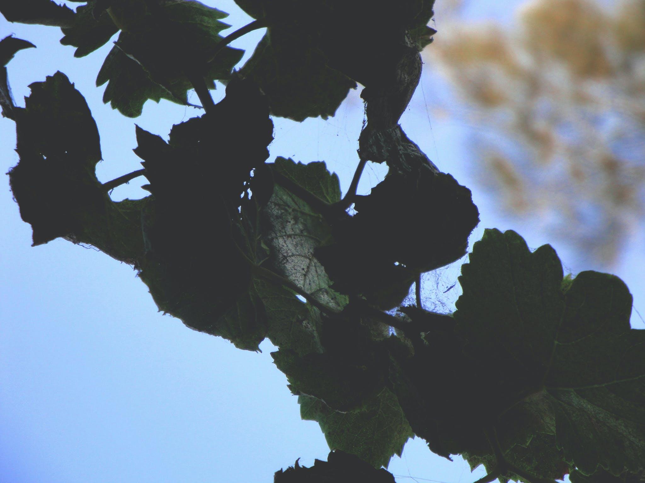 Free stock photo of blue sky, foliage, fresh, garden