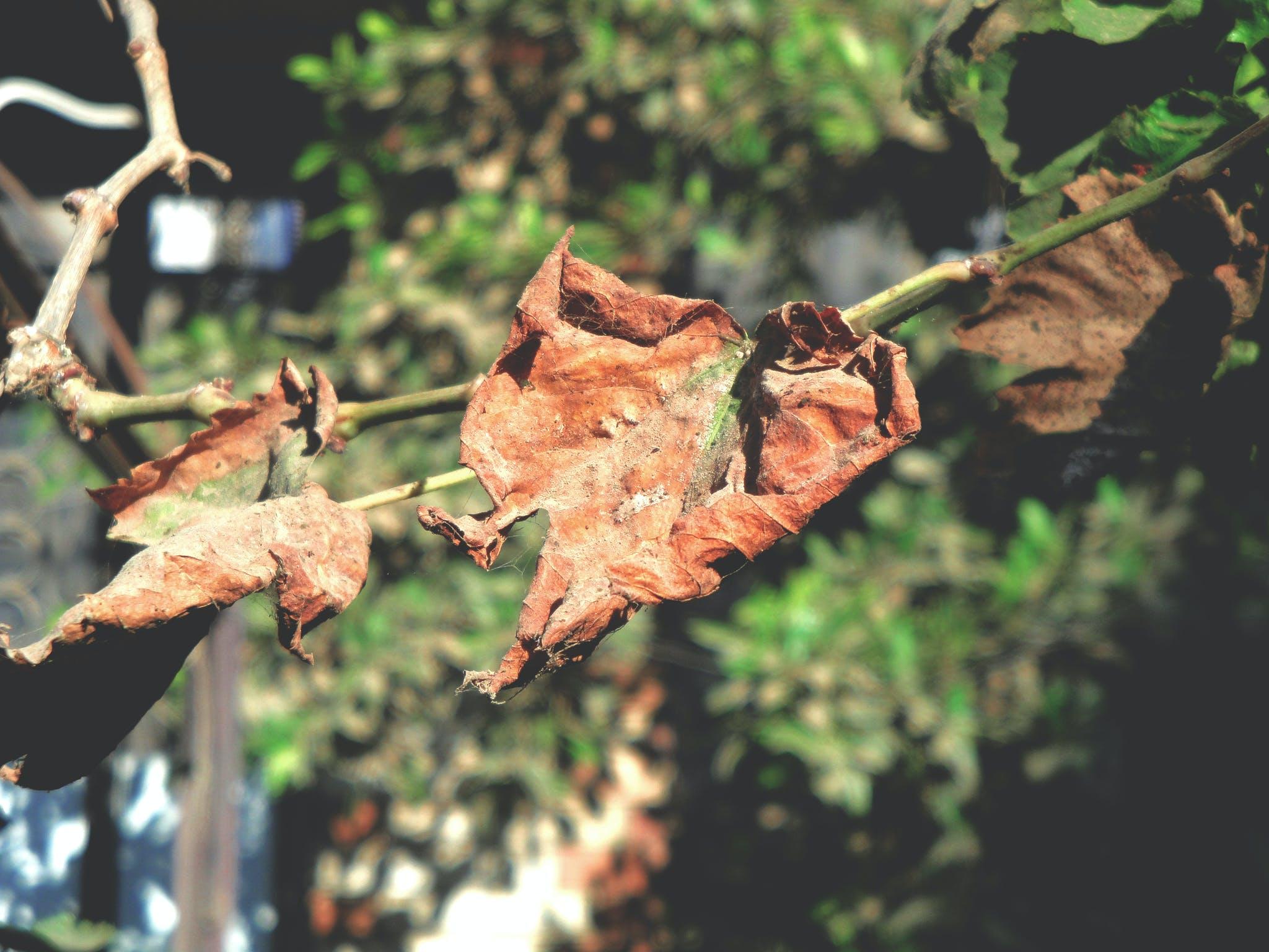 Free stock photo of autumn, autumn colours, autumn mood forest, blue sky