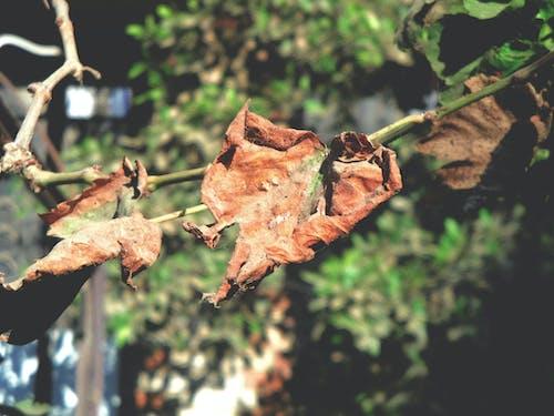 Безкоштовне стокове фото на тему «блакитне небо, виноград, дерева, дерево»