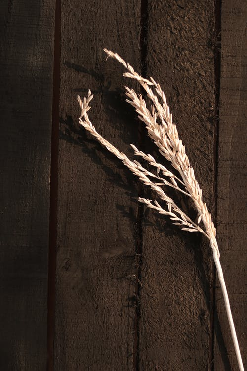 White Rope on Brown Wooden Surface