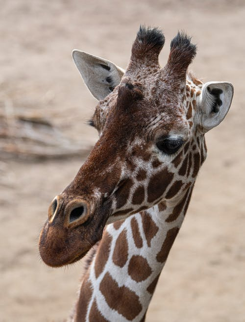 Fotos de stock gratuitas de animal, animal salvaje, animal zoológico