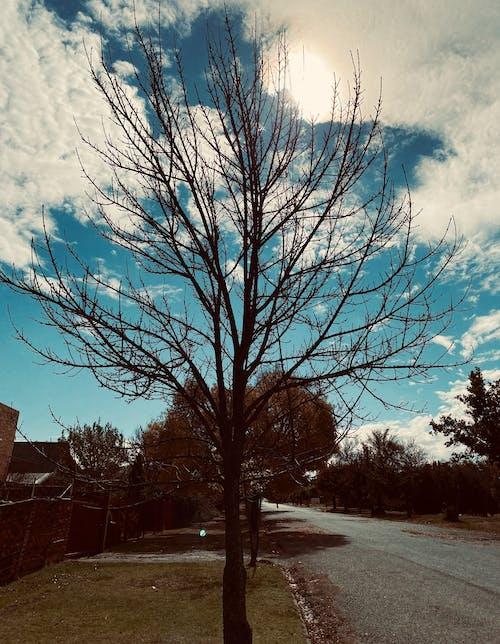 Photos gratuites de arbre, ciel bleu