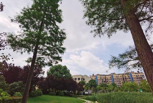 Бесплатное стоковое фото с вид, дерево