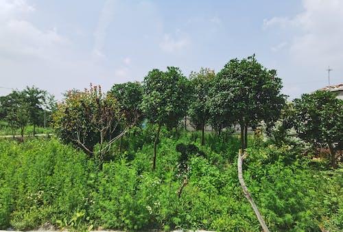 Бесплатное стоковое фото с деревья, зеленый