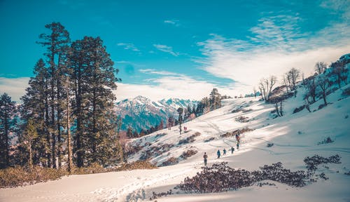Green Pine Trees on Snow Covered Ground Under Blue Sky